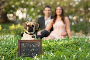 Dog at engagement